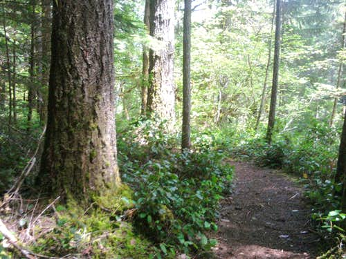 Curly Creek and Miller Falls Trail #31A