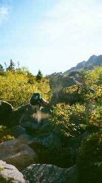 kings ravine trail below tree...