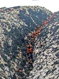 Lady Bugs on the Summit