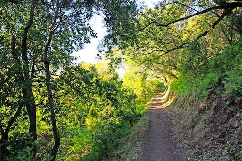 Black Mountain Trail