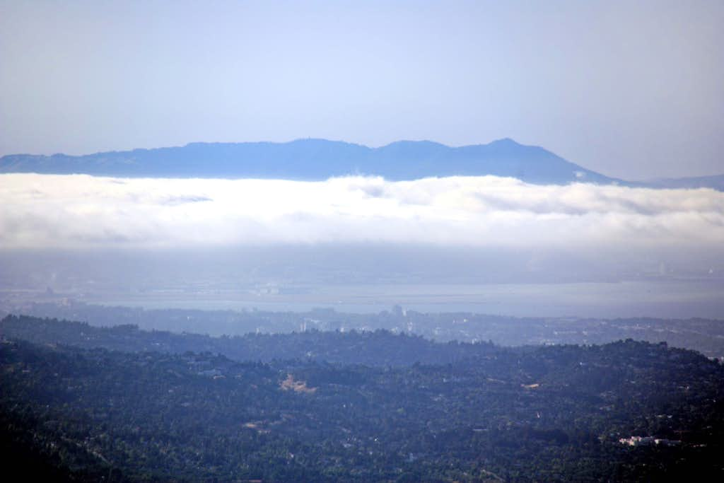 Mt. Tamalpais from Black Mountain