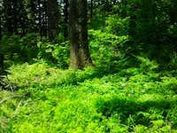 Green Mountain Summit Area