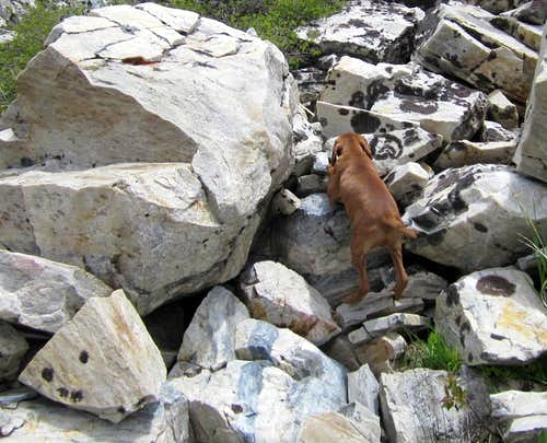 The rock climbing dog