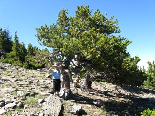 Trees near the summit