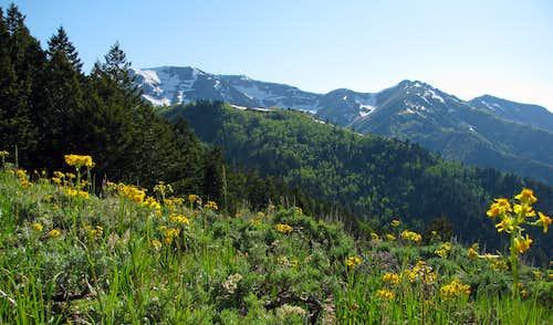 Butterfield Peak wildflowers