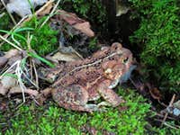Bumpy Frog