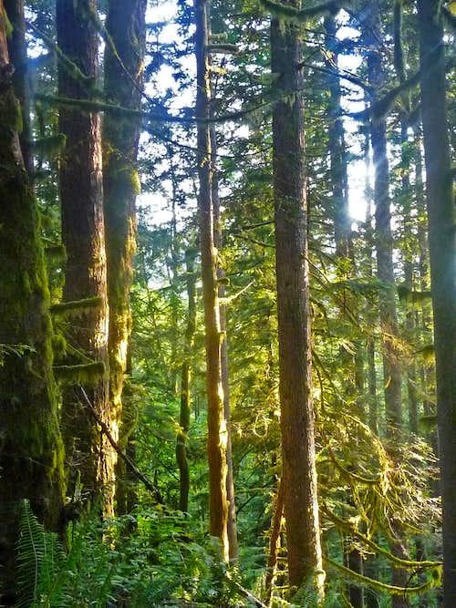 Sun Light on the Trees