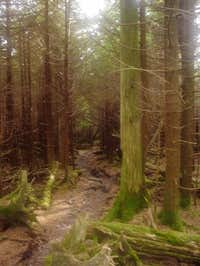 It's a beautifully forested...