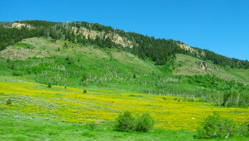 Logan Canyon wildflowers
