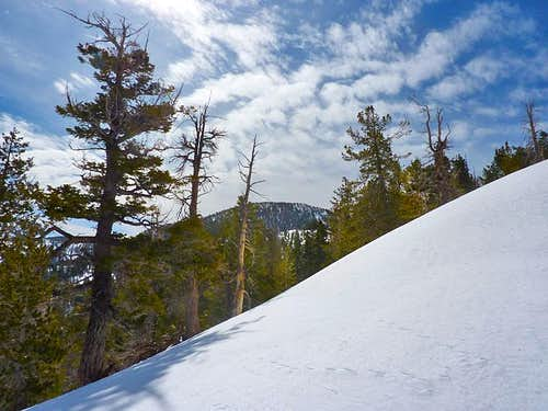 Snowshoeing Up Sugarloaf Mountain in Big Bear Lake