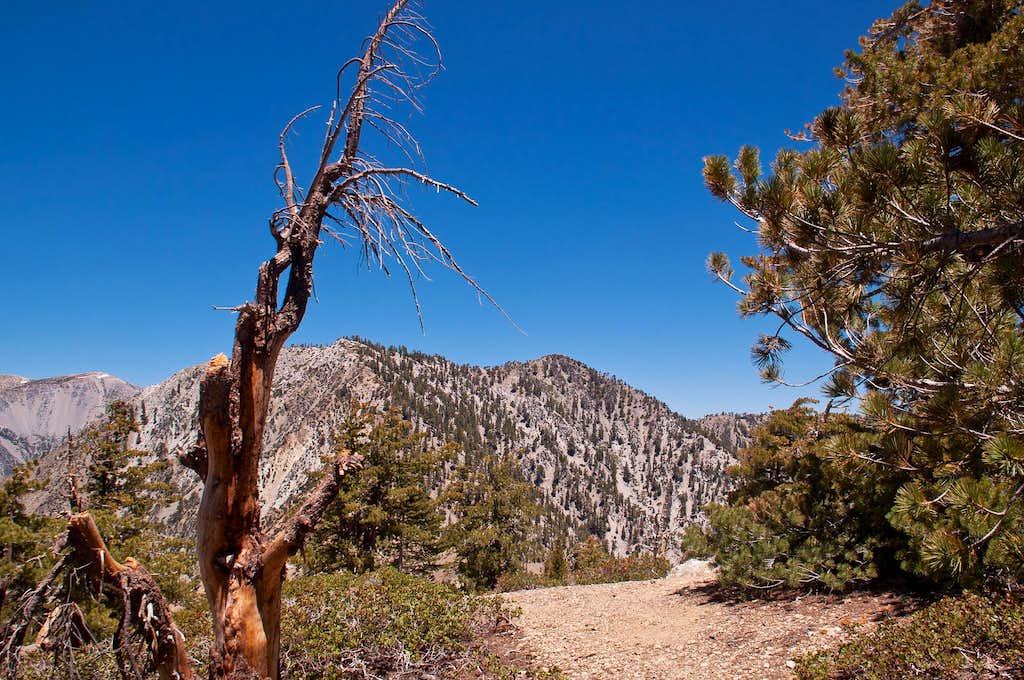 Timber Mountain