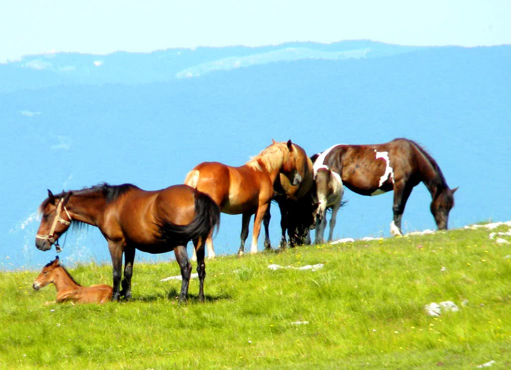 Horses on Lebršnik
