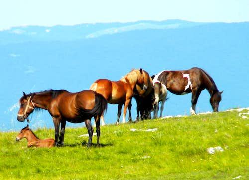 Horses on Lebršnik