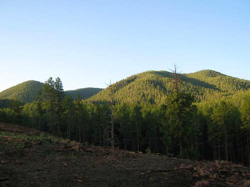 Sitgreaves Mountain AZ