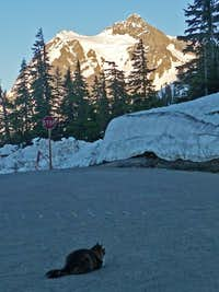 Mount Shuksan with a Cat