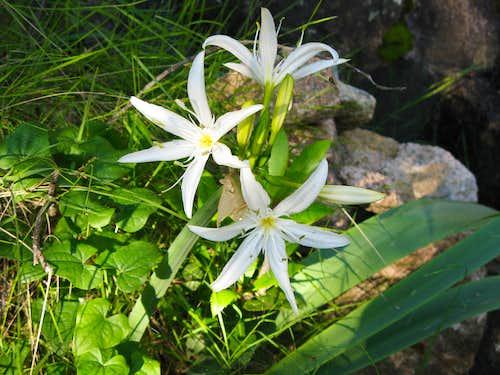 Bavedda flora