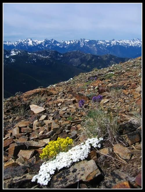 Wildflowers on Grey Peak