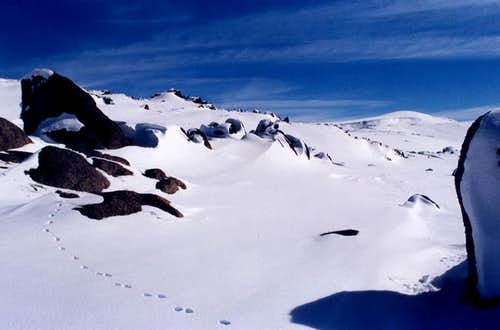 Mt Kosciusko National Park,...