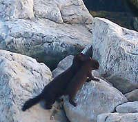 Mink mama and baby