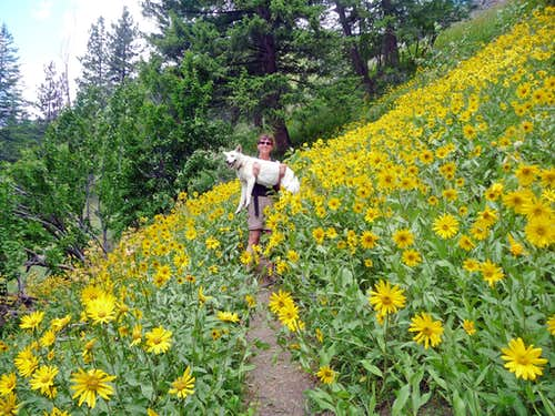 Joanna and Holly in a Field of Flowers