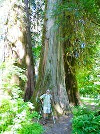 3 - Big Trees
