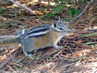 Chipmunk sneaking into our Camp