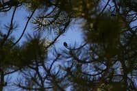 Hummingbird on his favourite spot