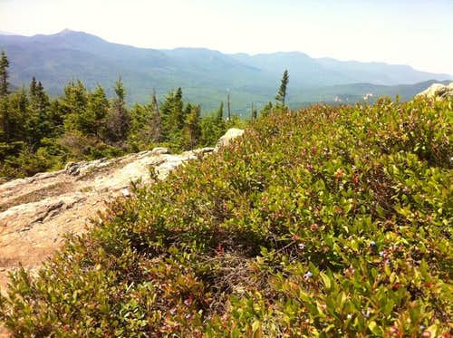 Summit berries on North Moat Mt