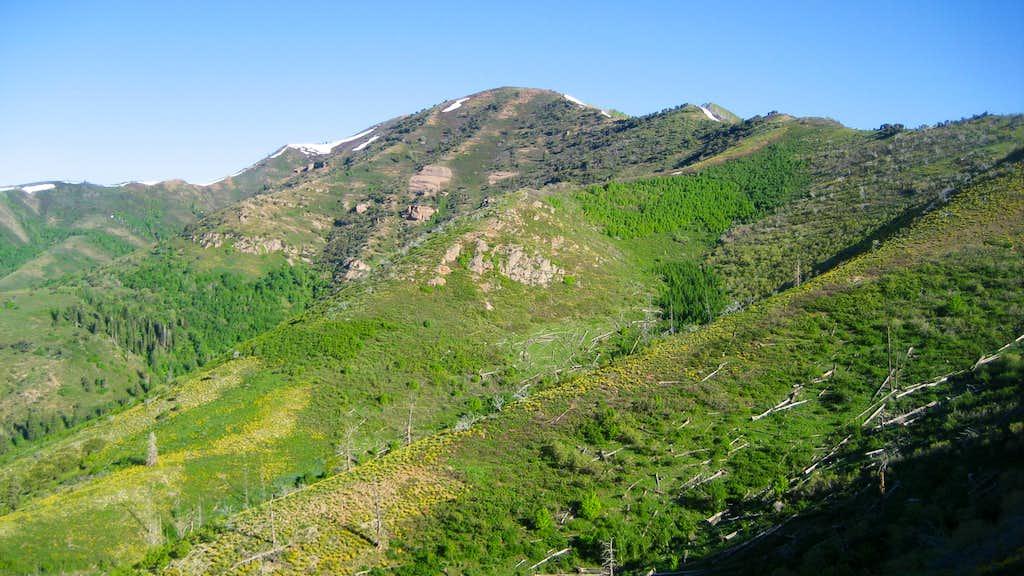 Lookout Peak w/ Wildflowers