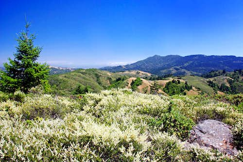 Mt. Tamalpais from Pine Mountain