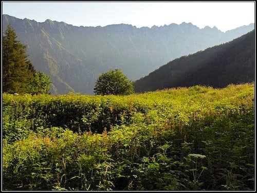 Tazaoro / Tam za goro alpine meadow
