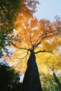 A tree in full color along...