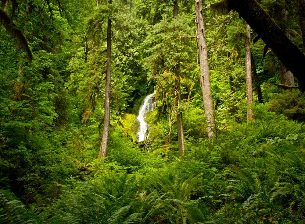 Waterfall in Hoh Rainforest, Mt. Olympus