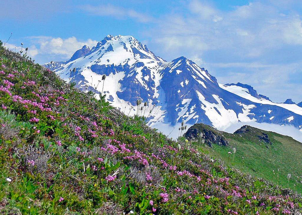 Glacier Peak with Flowers
