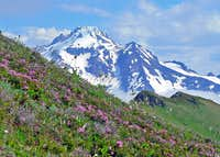 Glacier Peak with Flowers