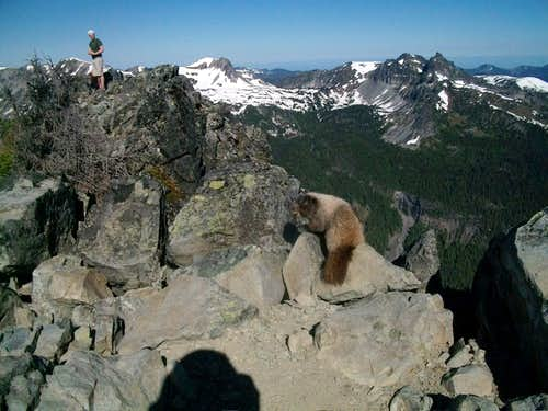 Marmot and Curtissimo on summit