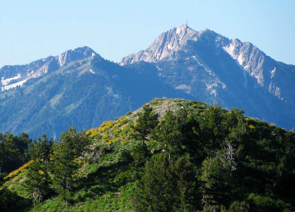 Mount Ogden from Skyline Trail