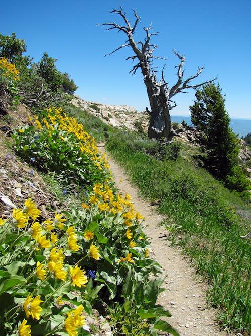 Skyline trail flowers & trees