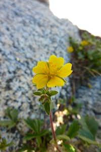 Tahquitz Wildflower