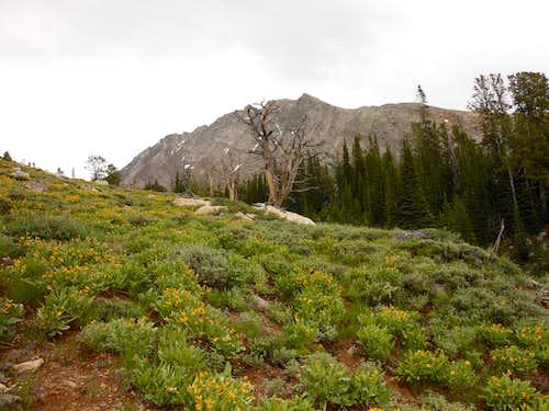 Duncans Peak