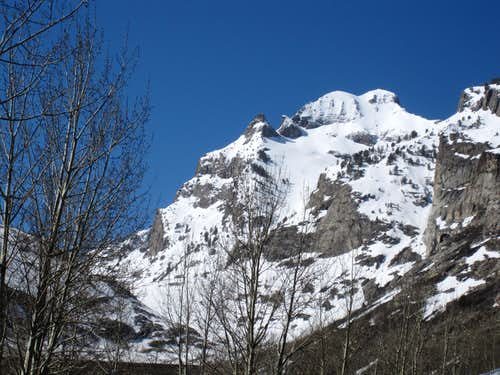 Mount Gilbert behind the aspen