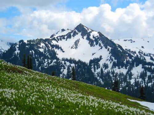 Peaceful Alpine Meadow