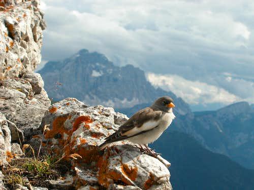 Looking around on the summit