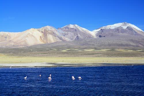 Acotango from Lago Chungara