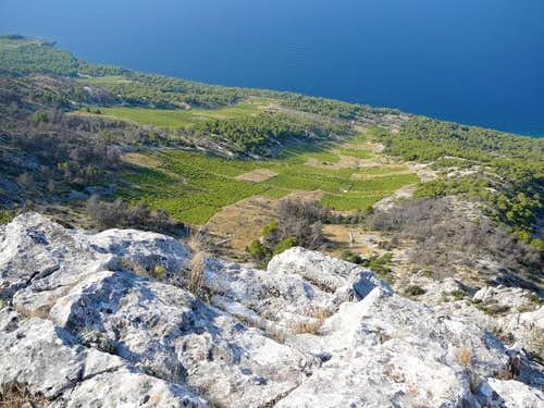 vineyards on the southern slopes of Hvar