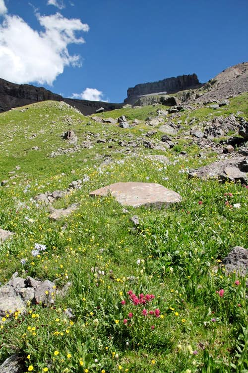 Wildflowers below Coxcomb Peak