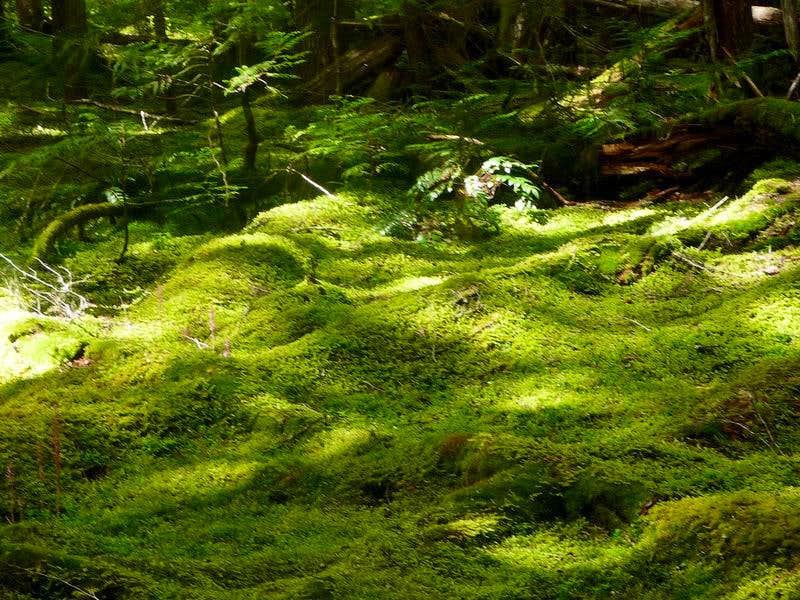 Foresty Spot Lights