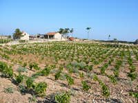 farm and vineyards below Sveti Nikola