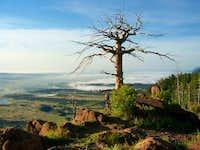 Tree on Mt. Herman