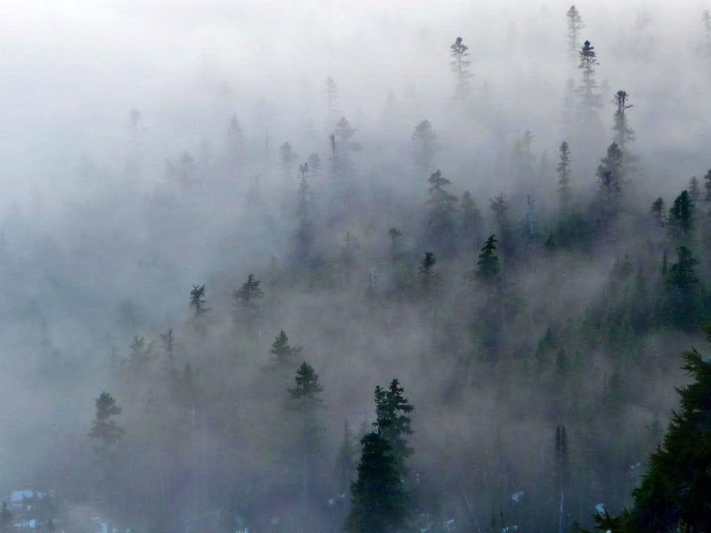 Misty Woods Below